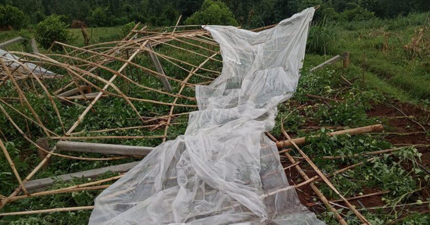 तुलसीपुरमा हावाहुरीले लाखौँको तरकारी खेती नोक्सान